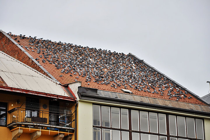 A2B Pest Control are able to install spikes to deter birds from roofs in Tonbridge.