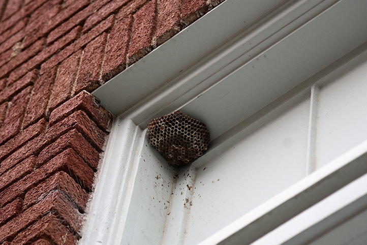 We provide a wasp nest removal service for domestic and commercial properties in Tonbridge.